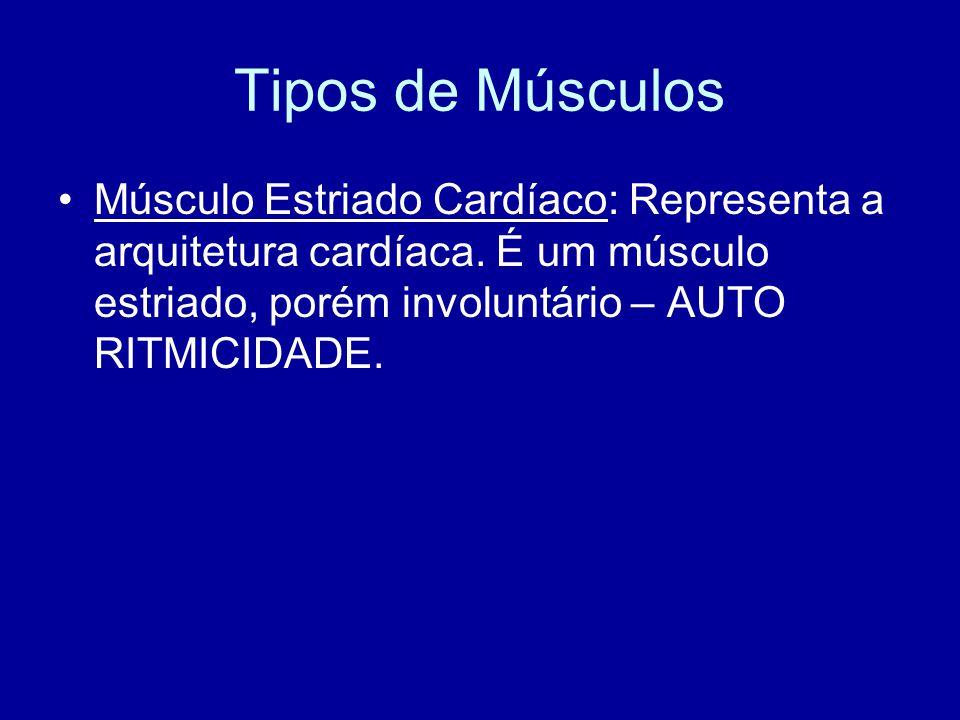 Tipos de Músculos Músculo Estriado Cardíaco: Representa a arquitetura cardíaca.