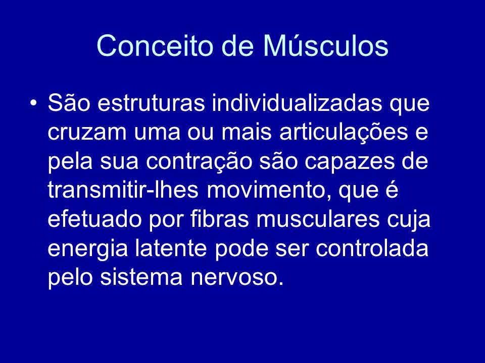 Conceito de Músculos