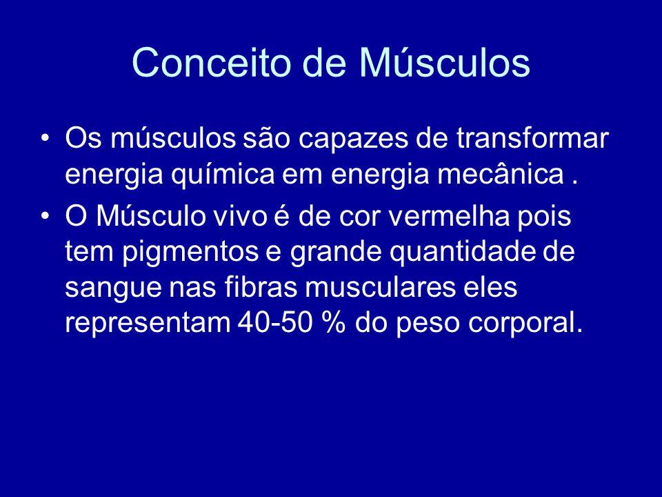 Conceito de Músculos Os músculos são capazes de transformar energia química em energia mecânica .