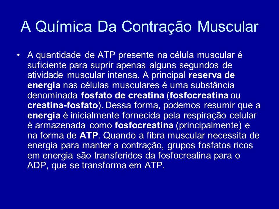 A Química Da Contração Muscular