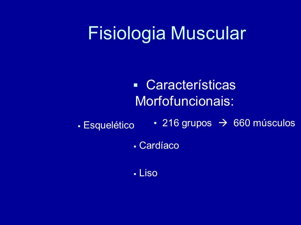 Características Morfofuncionais: