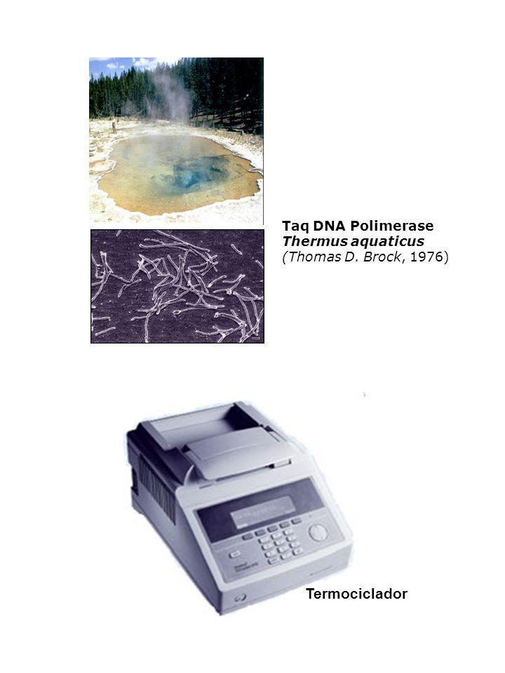 Termociclador Taq DNA Polimerase Thermus aquaticus