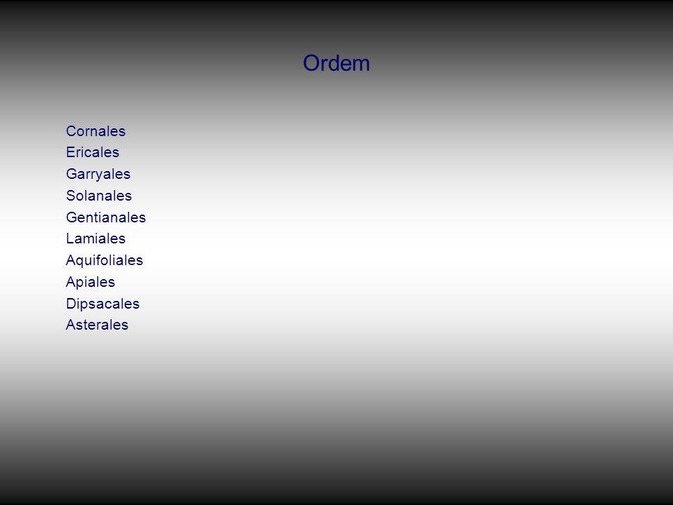 Ordem Cornales Ericales Garryales Solanales Gentianales Lamiales