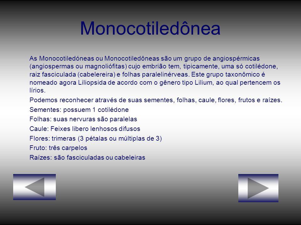 Monocotiledônea