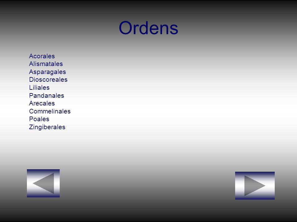 Ordens Acorales Alismatales Asparagales Dioscoreales Liliales