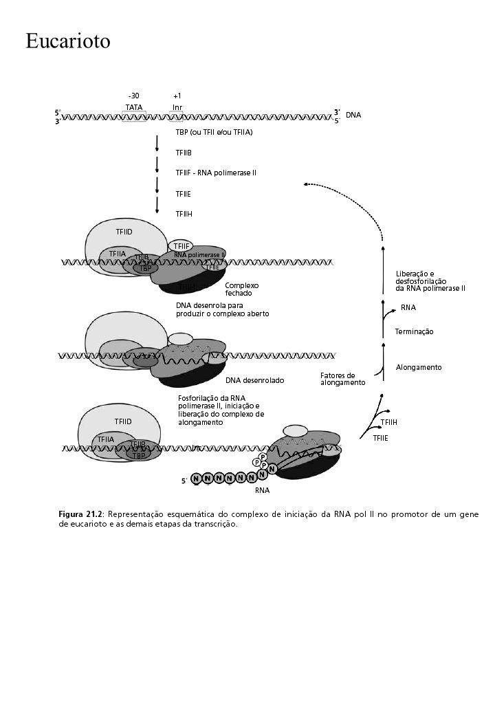Eucarioto