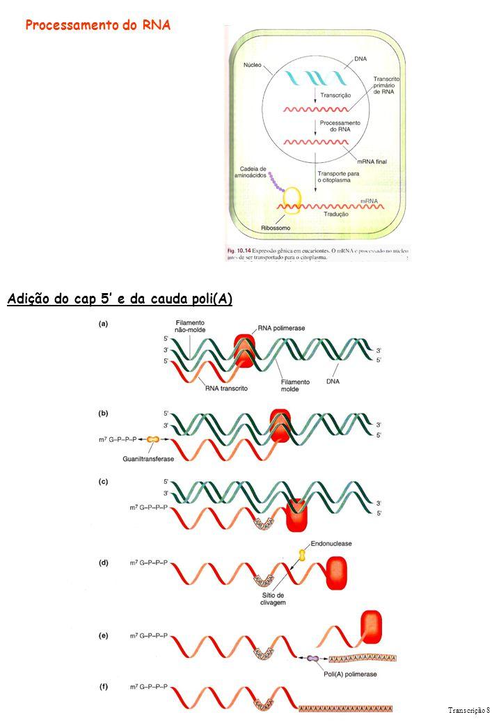 Adição do cap 5' e da cauda poli(A)