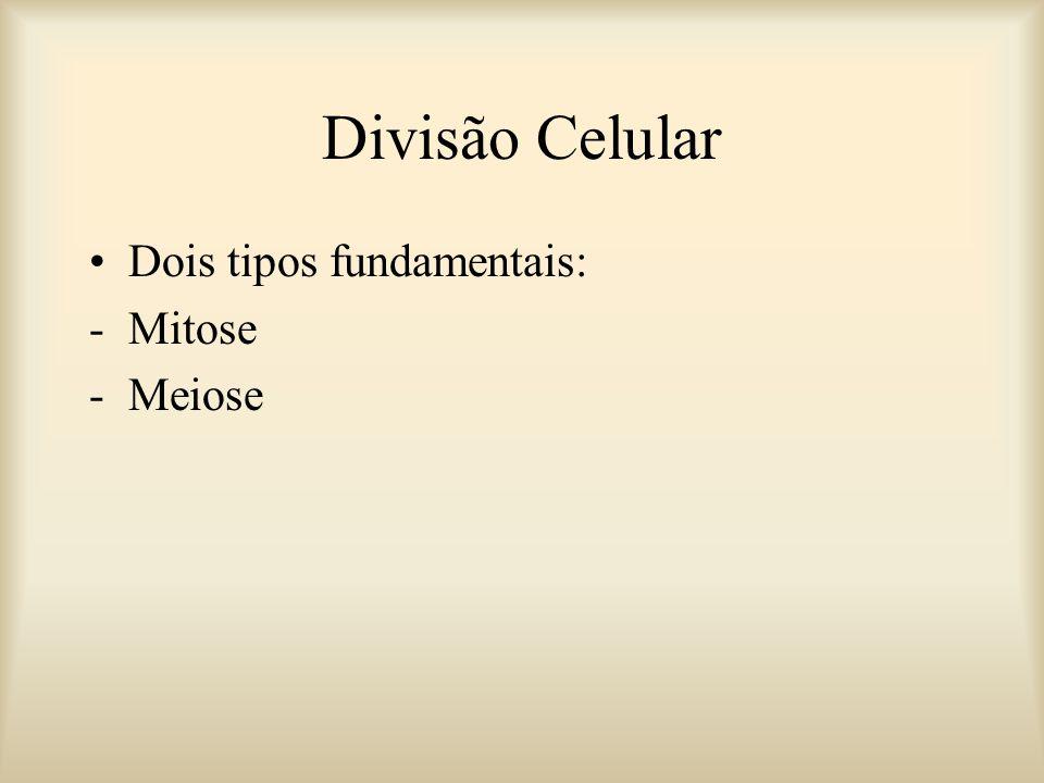 Divisão Celular Dois tipos fundamentais: Mitose Meiose