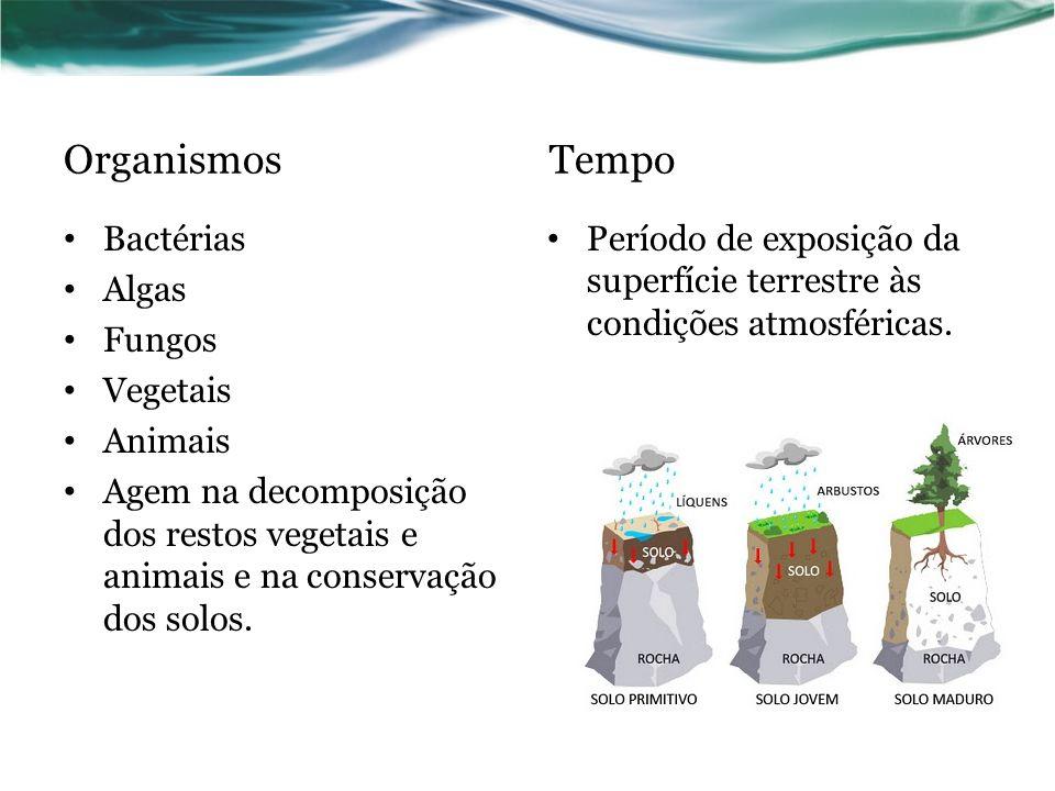Organismos Tempo Bactérias Algas Fungos Vegetais Animais