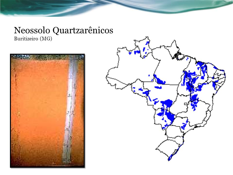 Neossolo Quartzarênicos Buritizeiro (MG)