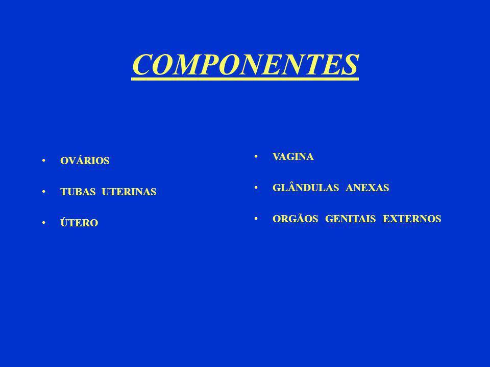 COMPONENTES VAGINA OVÁRIOS GLÂNDULAS ANEXAS TUBAS UTERINAS