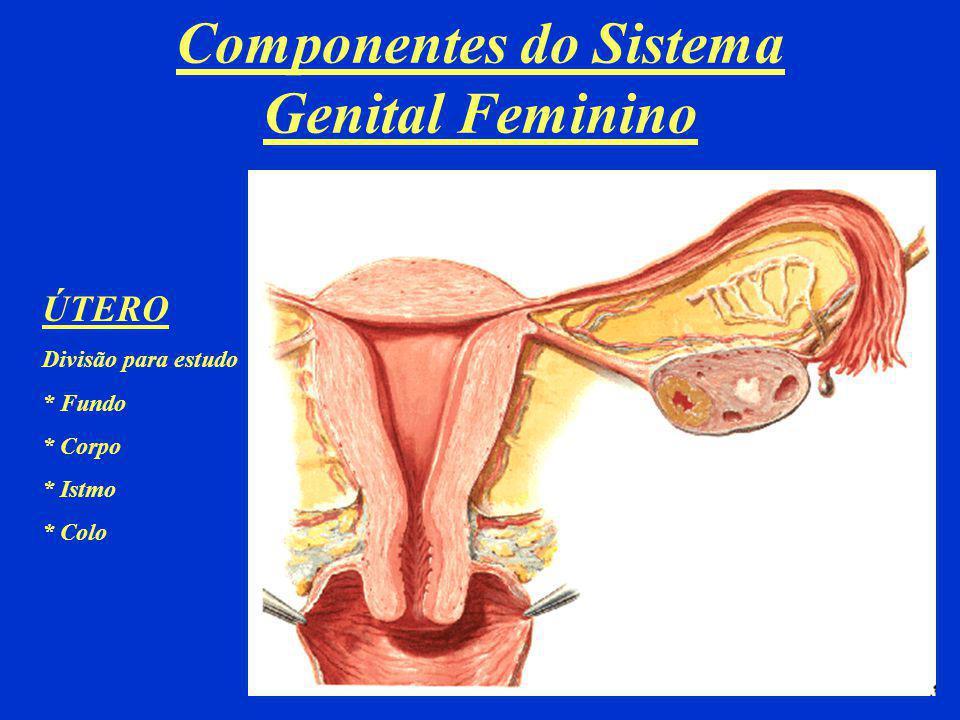 Componentes do Sistema Genital Feminino