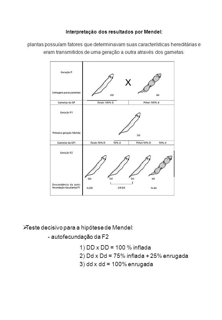 Interpretação dos resultados por Mendel: