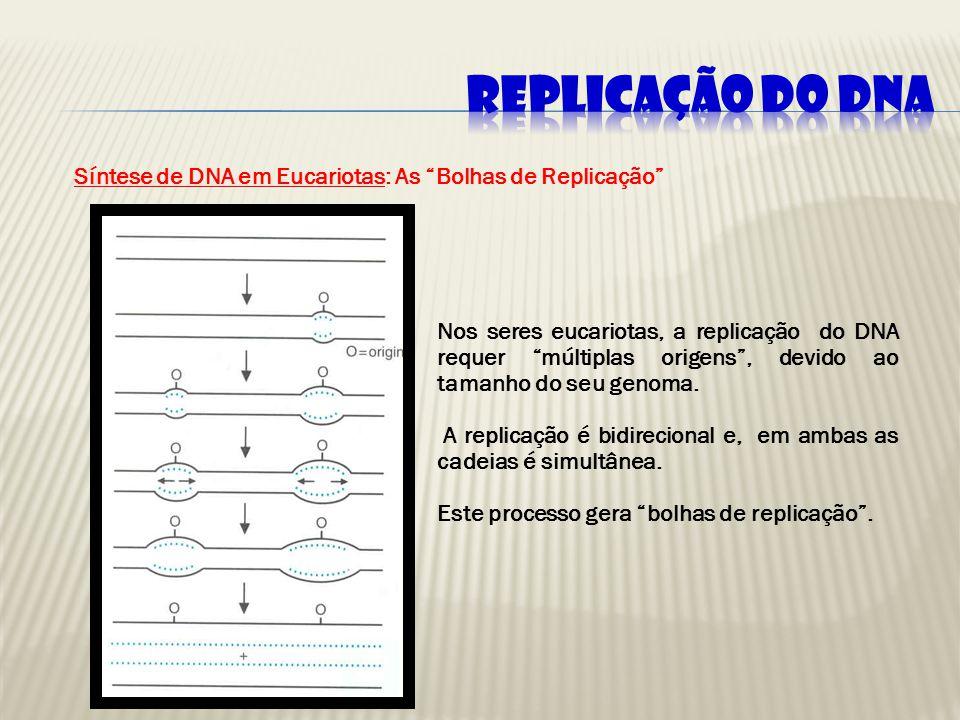 REPLICAÇÃO DO DNA Síntese de DNA em Eucariotas: As Bolhas de Replicação