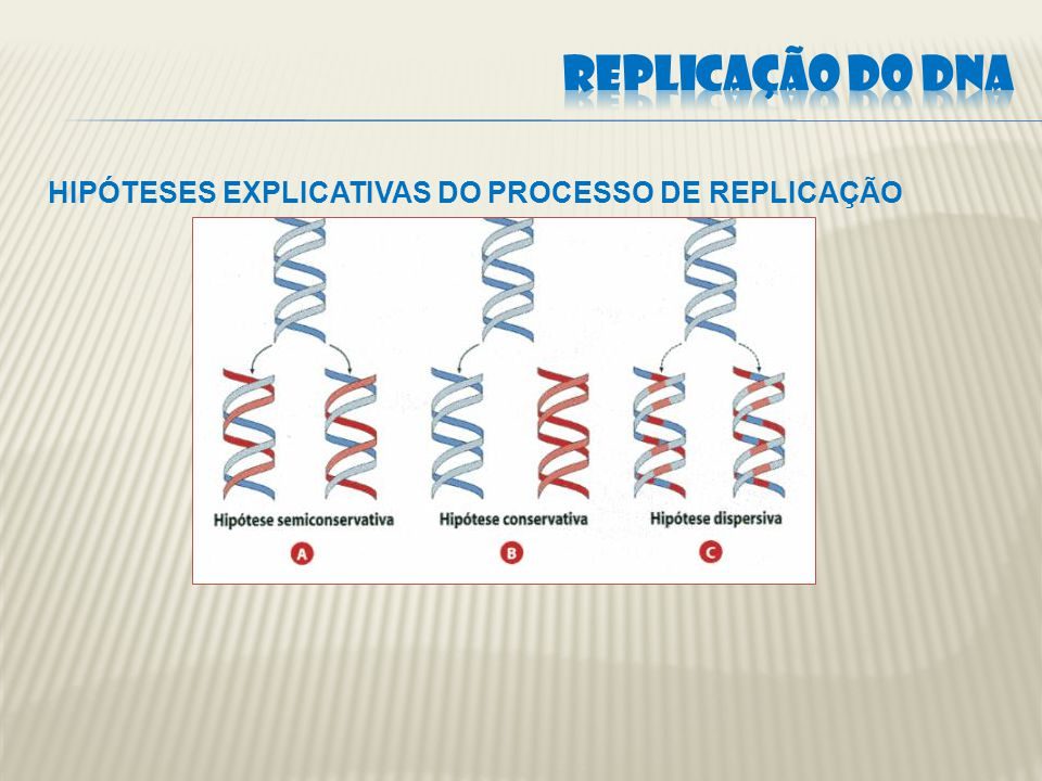 REPLICAÇÃO DO DNA HIPÓTESES EXPLICATIVAS DO PROCESSO DE REPLICAÇÃO
