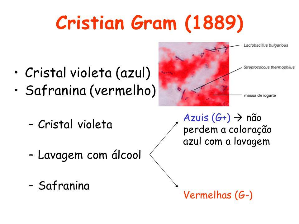 Cristian Gram (1889) Cristal violeta (azul) Safranina (vermelho)