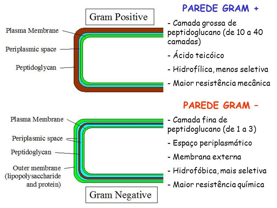 PAREDE GRAM + PAREDE GRAM –