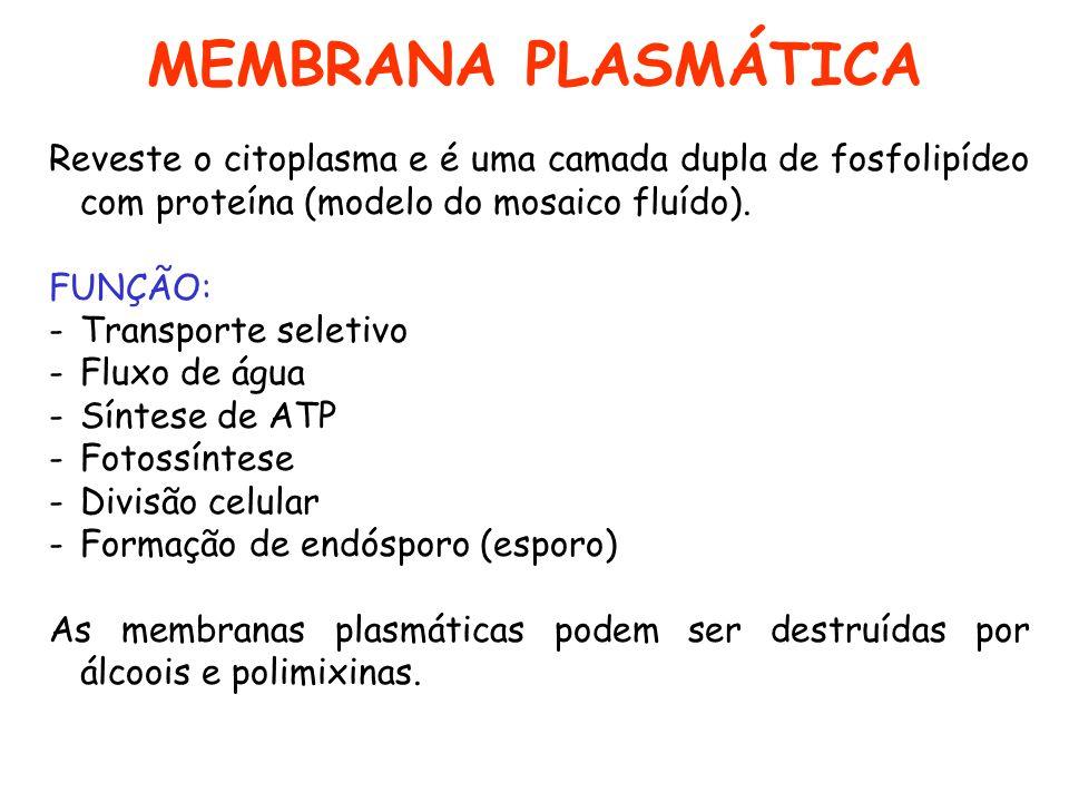 MEMBRANA PLASMÁTICA Reveste o citoplasma e é uma camada dupla de fosfolipídeo com proteína (modelo do mosaico fluído).