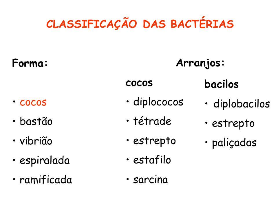 CLASSIFICAÇÃO DAS BACTÉRIAS