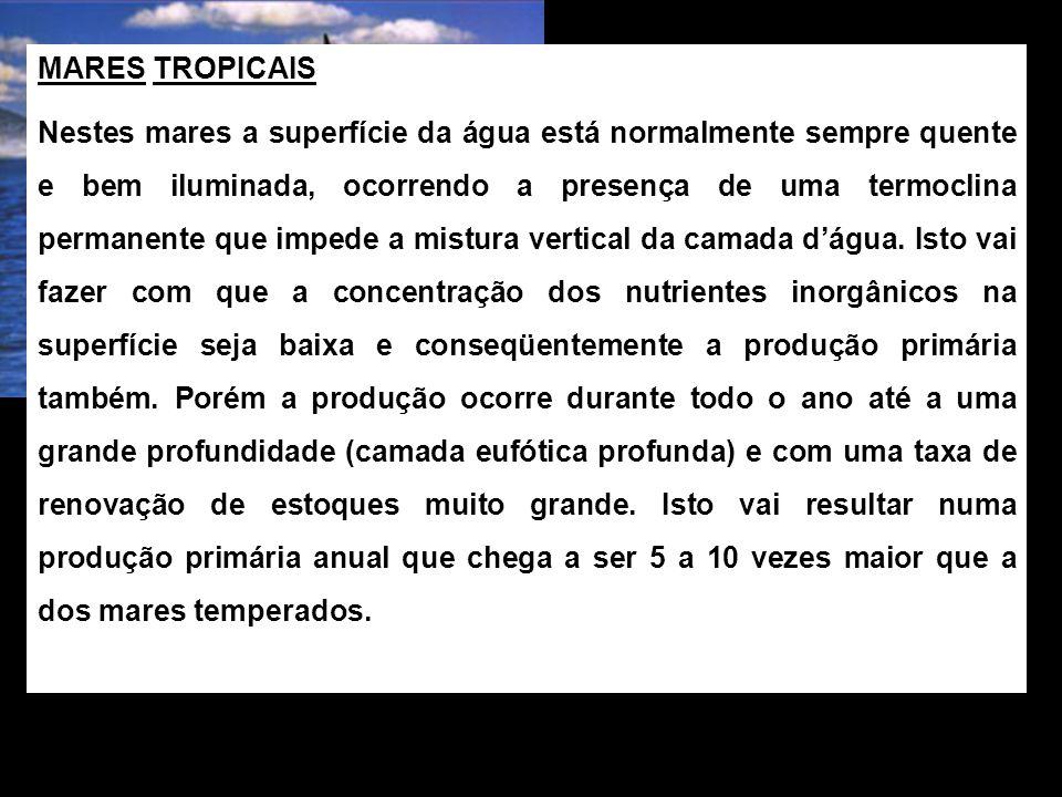 MARES TROPICAIS