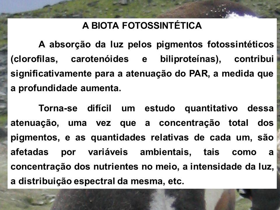 A BIOTA FOTOSSINTÉTICA