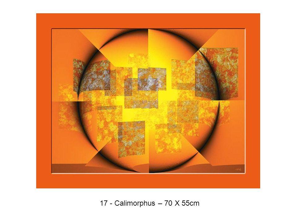 17 - Calimorphus – 70 X 55cm