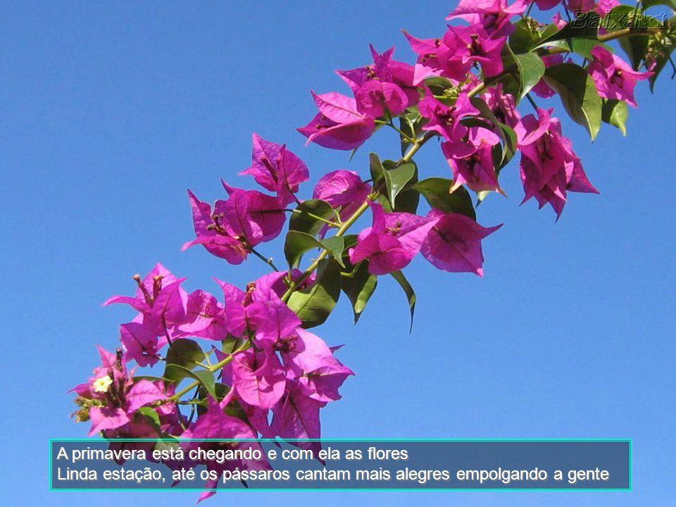 A primavera está chegando e com ela as flores
