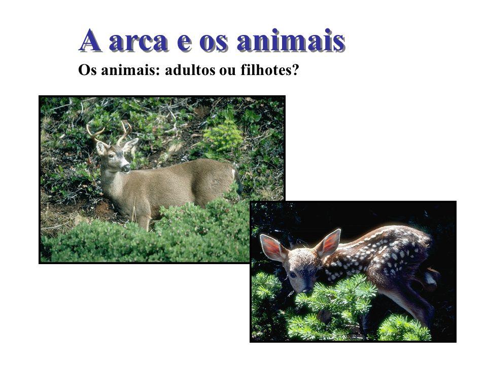 A arca e os animais Os animais: adultos ou filhotes