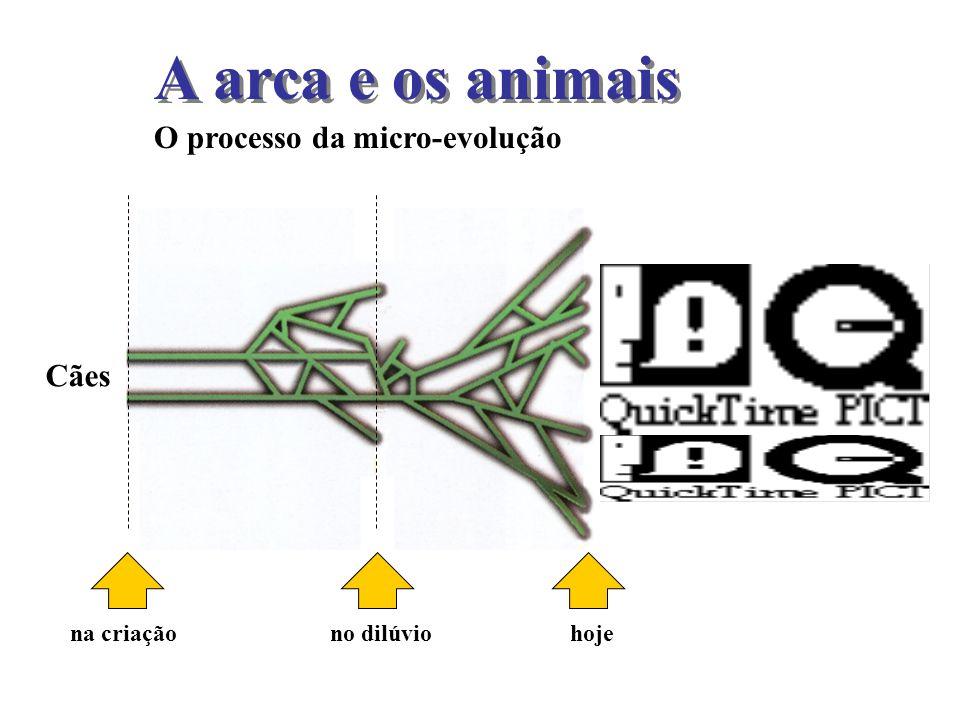 A arca e os animais O processo da micro-evolução Cães na criação