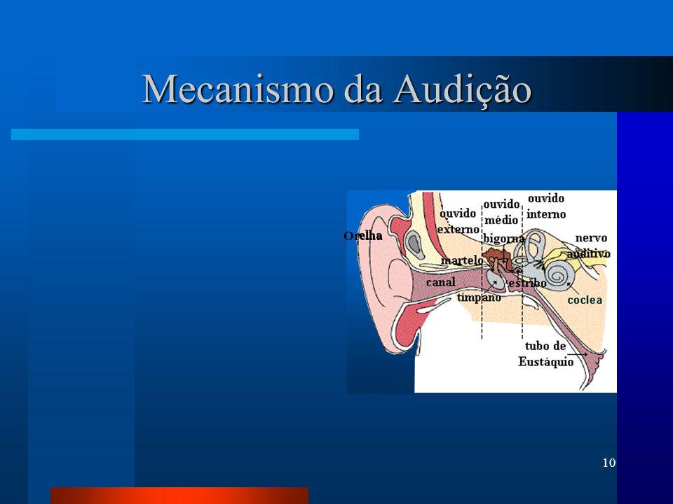 Mecanismo da Audição Orelha