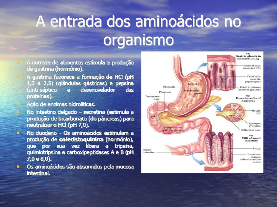 A entrada dos aminoácidos no organismo