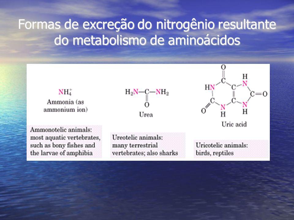 Formas de excreção do nitrogênio resultante do metabolismo de aminoácidos