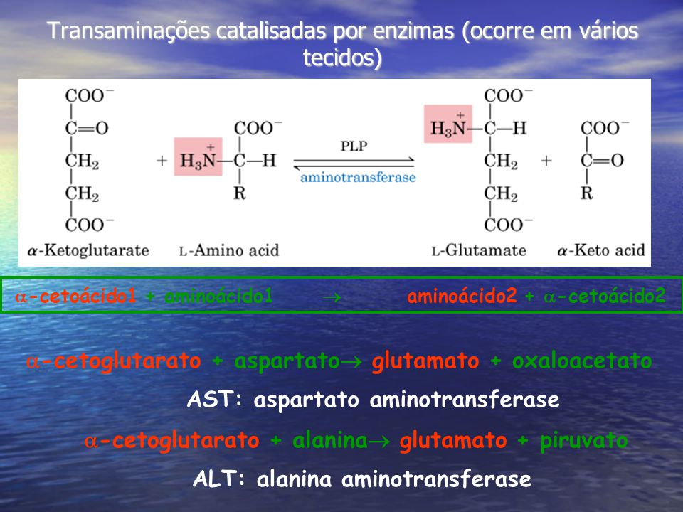 Transaminações catalisadas por enzimas (ocorre em vários tecidos)