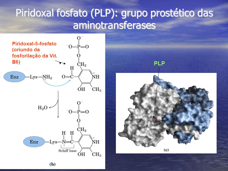 Piridoxal fosfato (PLP): grupo prostético das aminotransferases