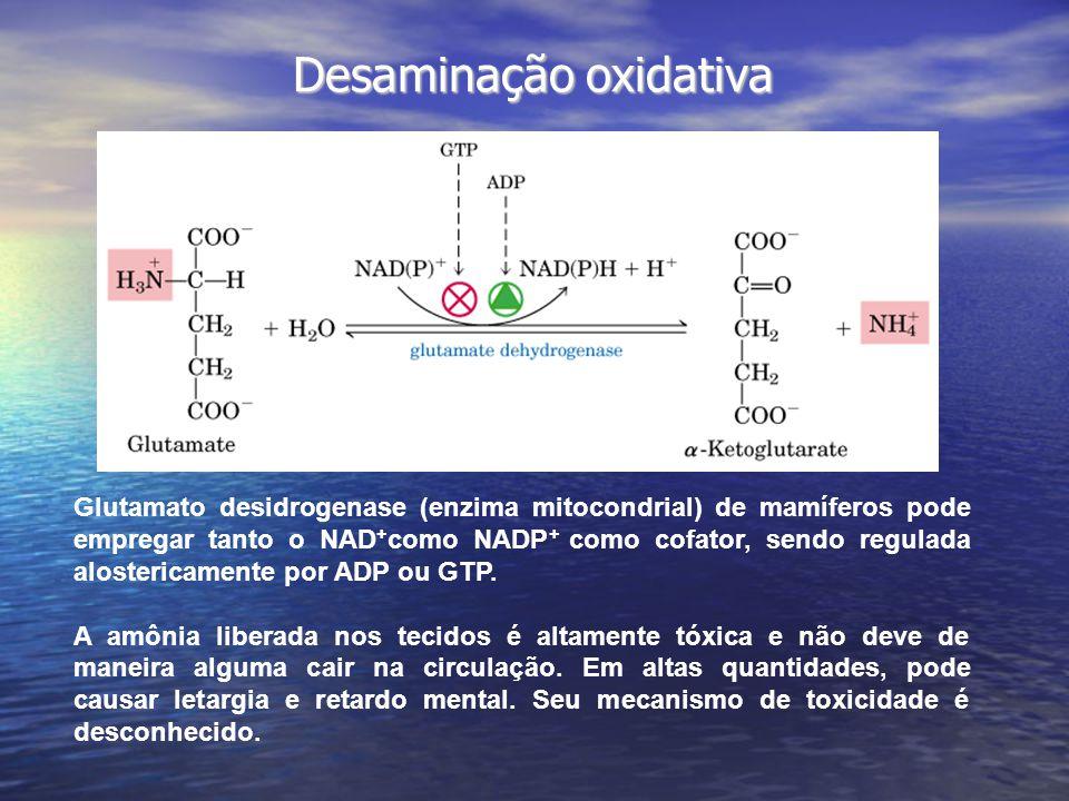 Desaminação oxidativa