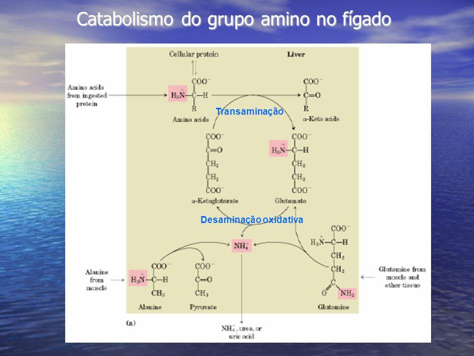 Catabolismo do grupo amino no fígado