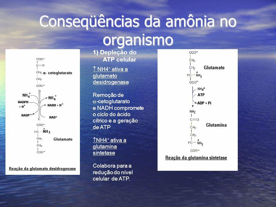 Conseqüências da amônia no organismo