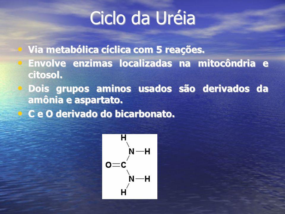Ciclo da Uréia Via metabólica cíclica com 5 reações.