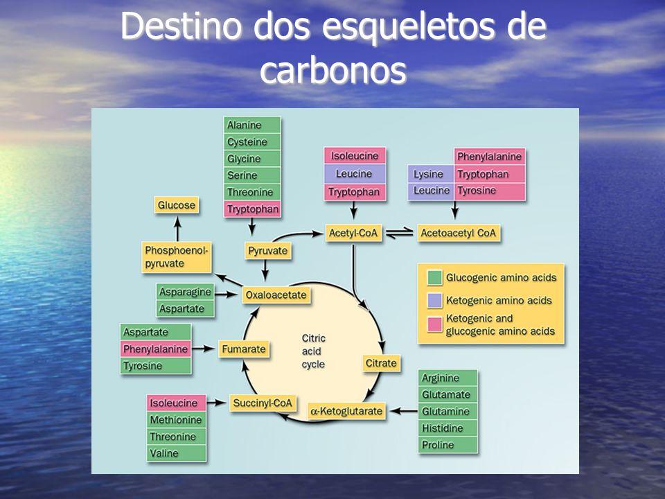 Destino dos esqueletos de carbonos