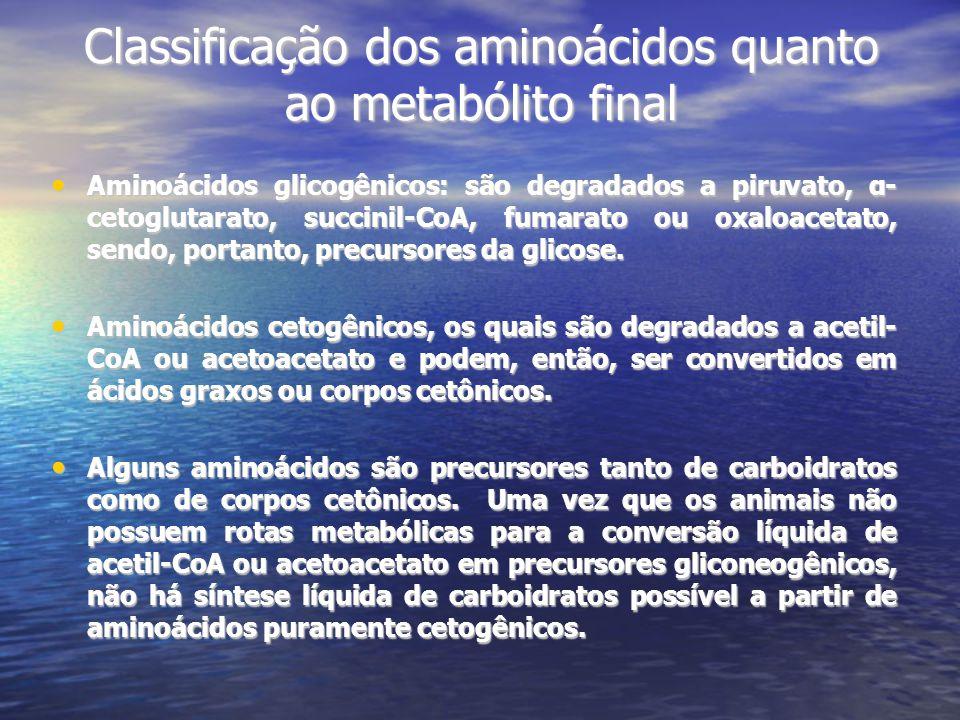 Classificação dos aminoácidos quanto ao metabólito final