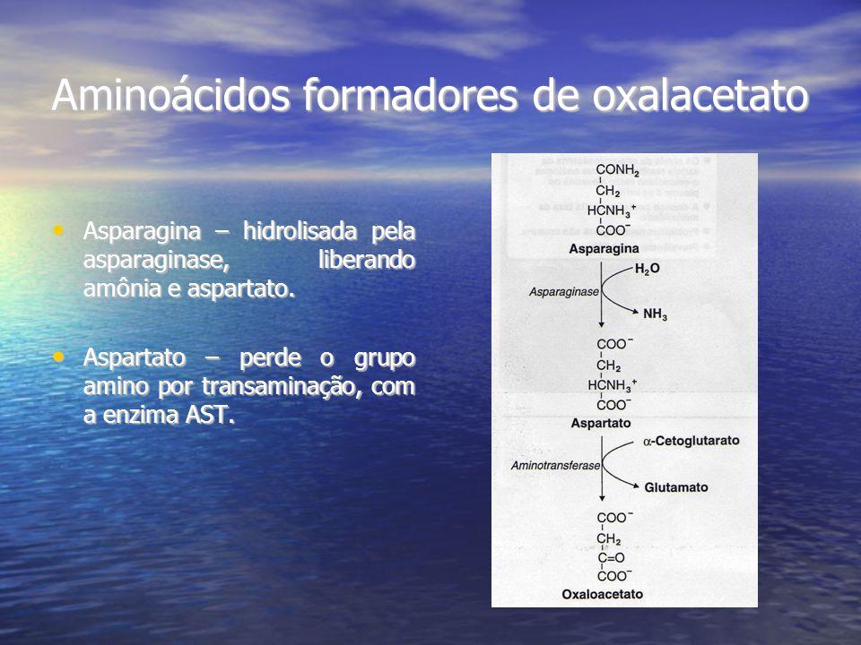 Aminoácidos formadores de oxalacetato
