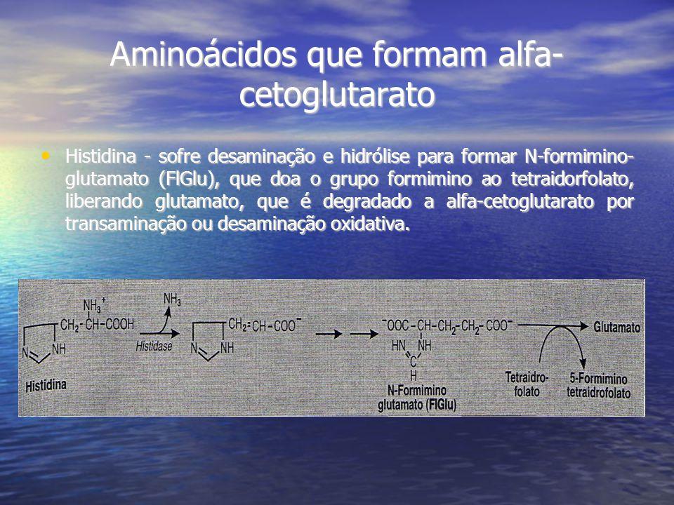 Aminoácidos que formam alfa-cetoglutarato