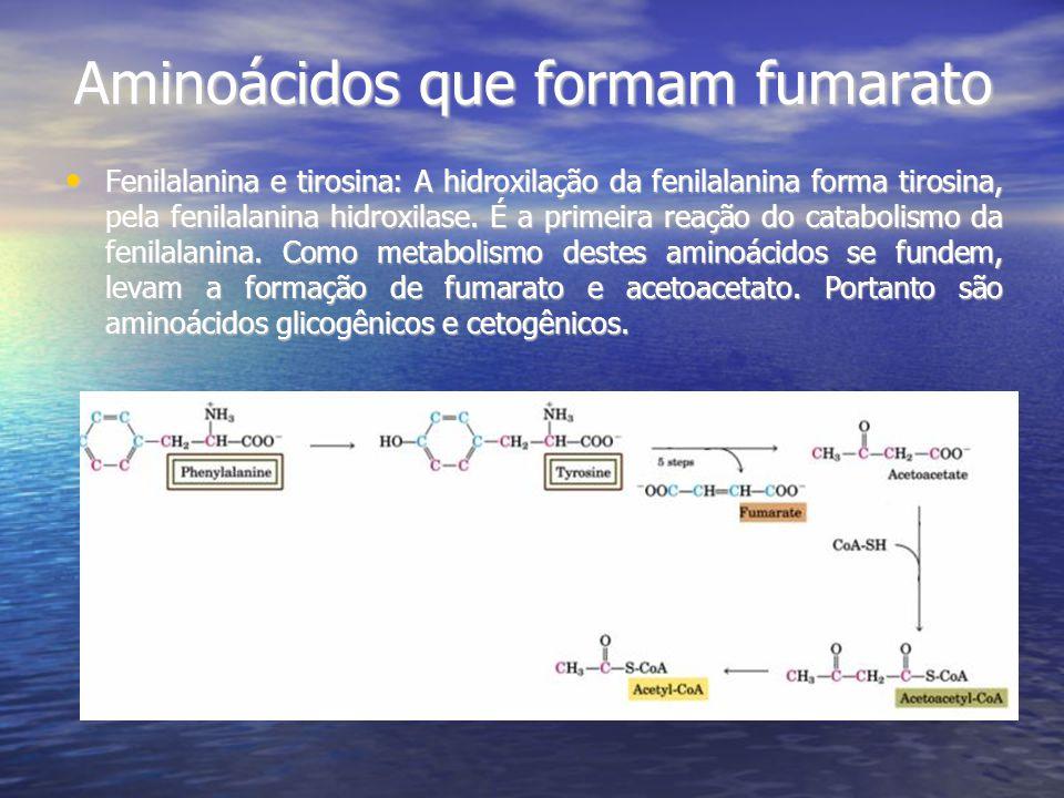 Aminoácidos que formam fumarato