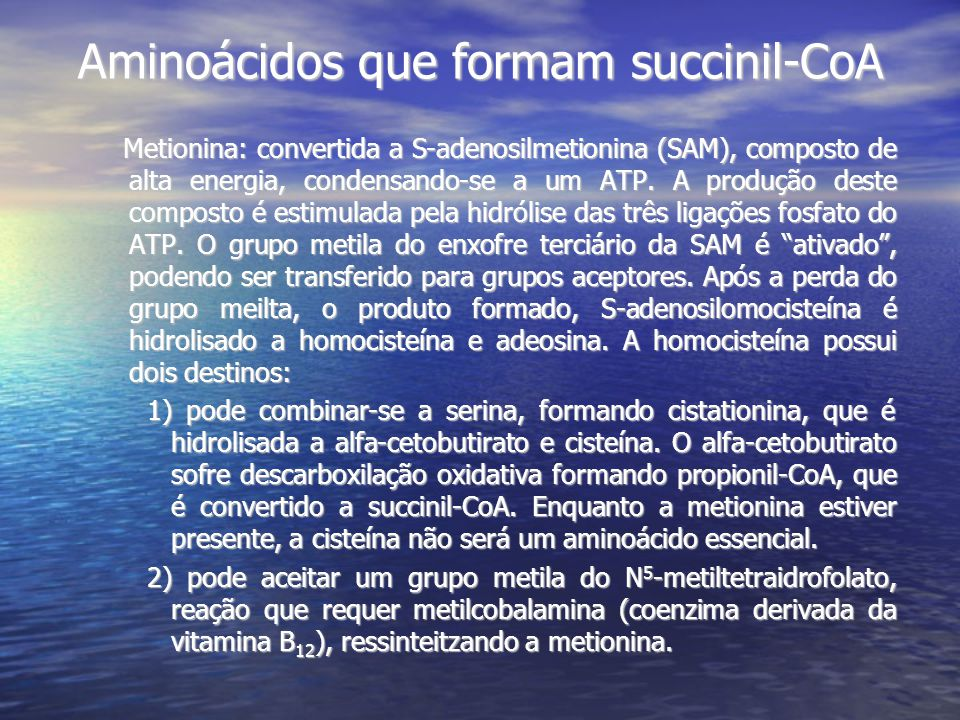 Aminoácidos que formam succinil-CoA