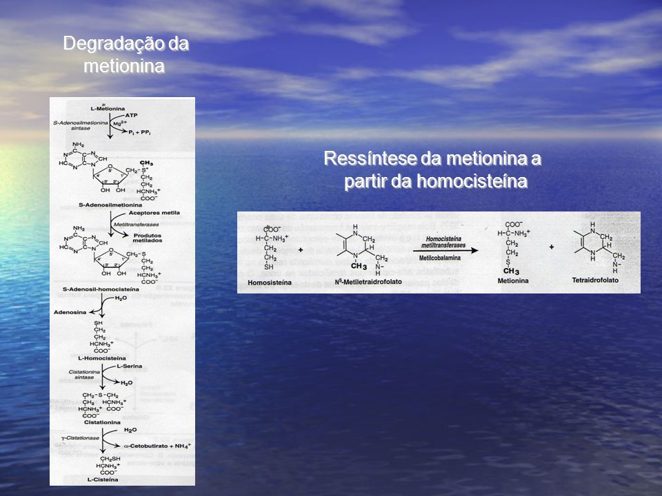 Degradação da metionina