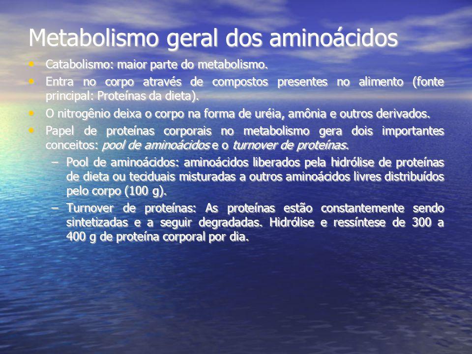 Metabolismo geral dos aminoácidos