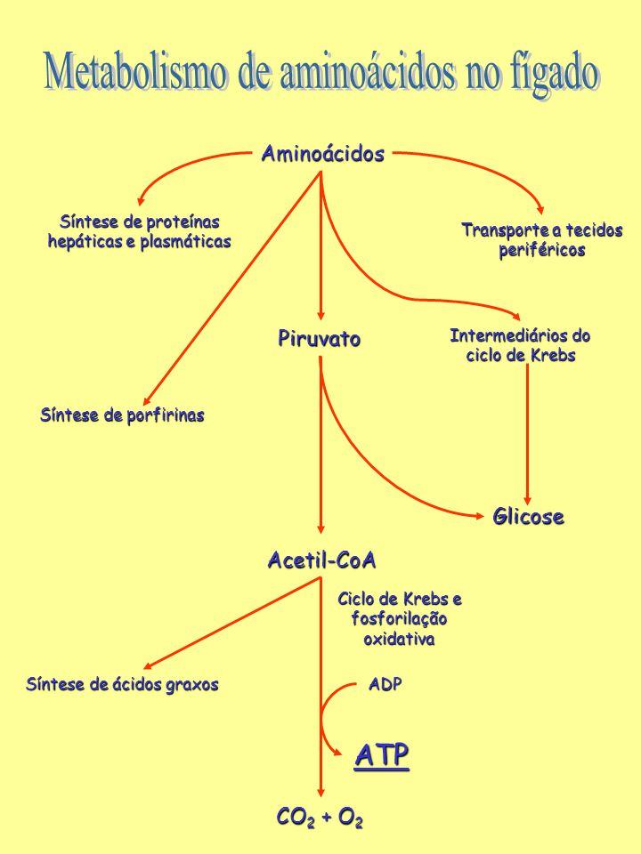 Metabolismo de aminoácidos no fígado