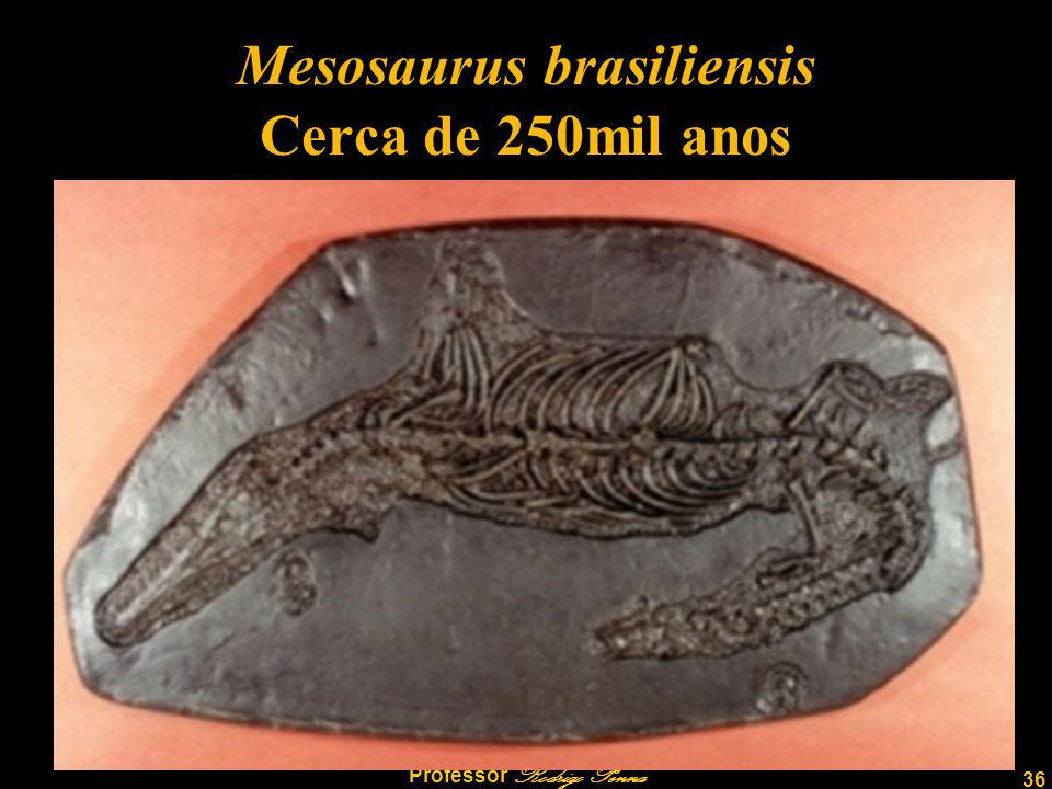 Mesosaurus brasiliensis Cerca de 250mil anos