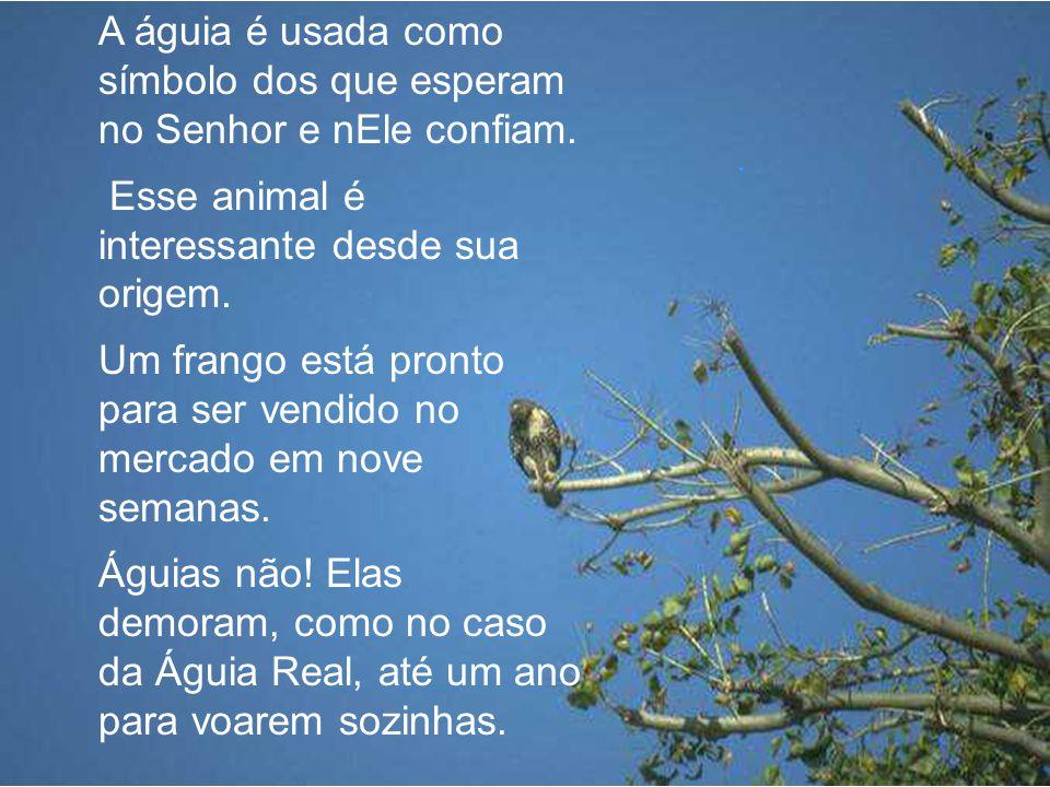 A águia é usada como símbolo dos que esperam no Senhor e nEle confiam.