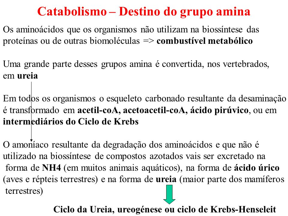 Catabolismo – Destino do grupo amina